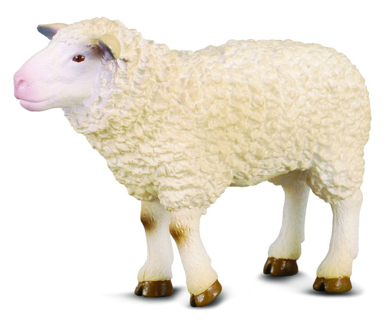 CO88008 Sheep