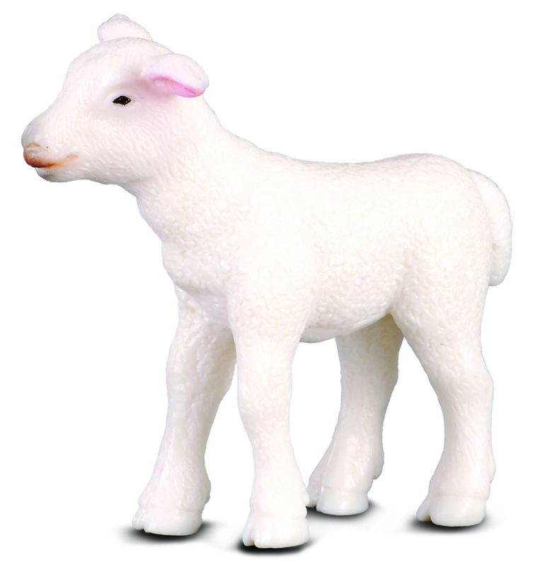 CO88009 Lamb Standing