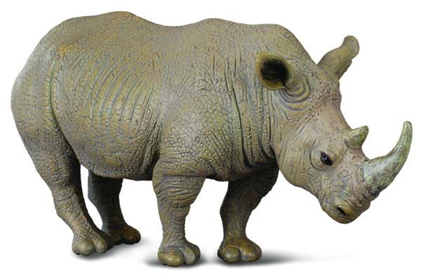 CO88031 White Rhinoceros