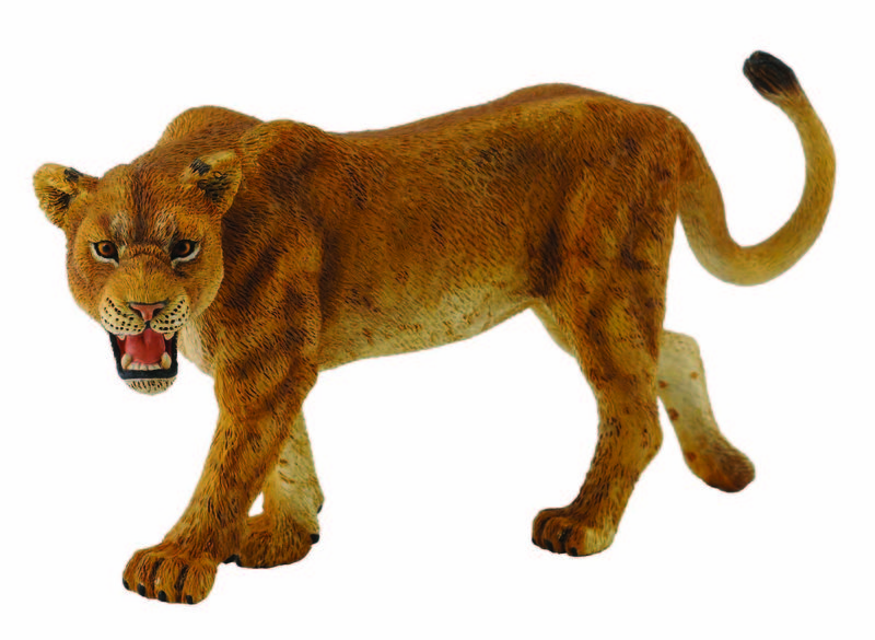 CO88415 Lioness