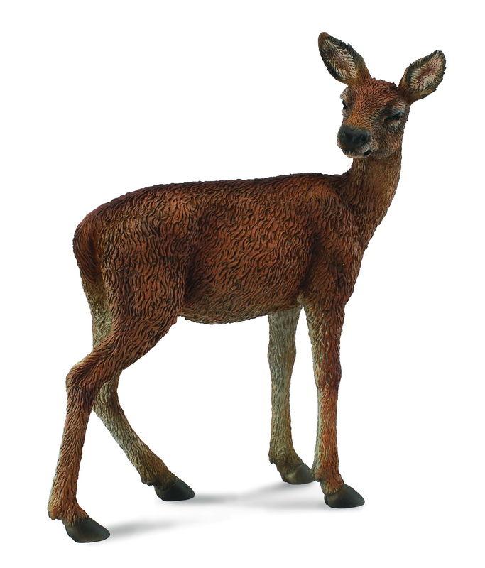 CO88470 Red Hind Deer