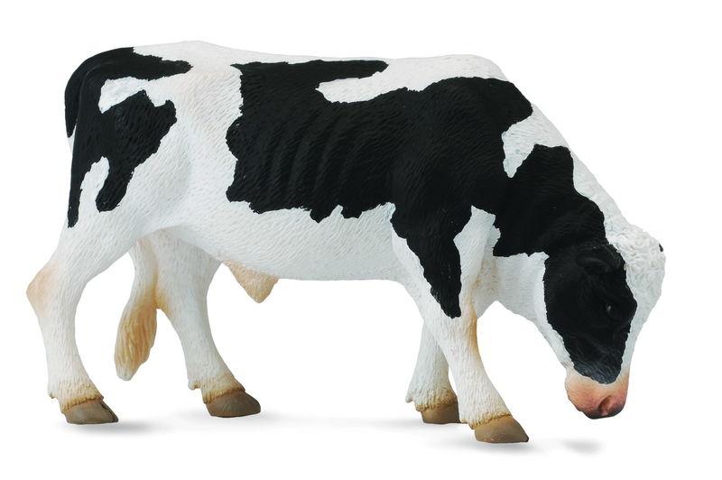 CO88482 Friesian Bull