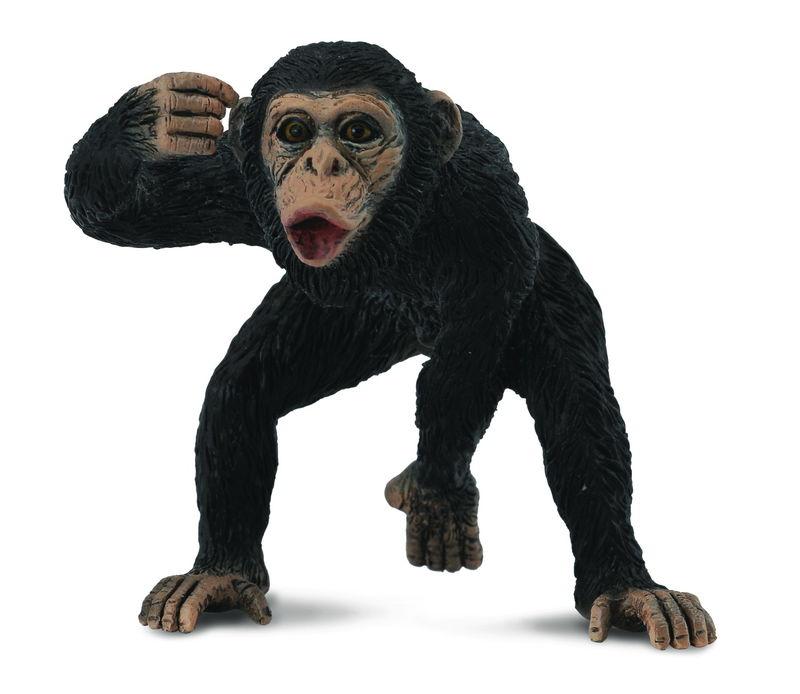 CO88492 Chimpanzee Male