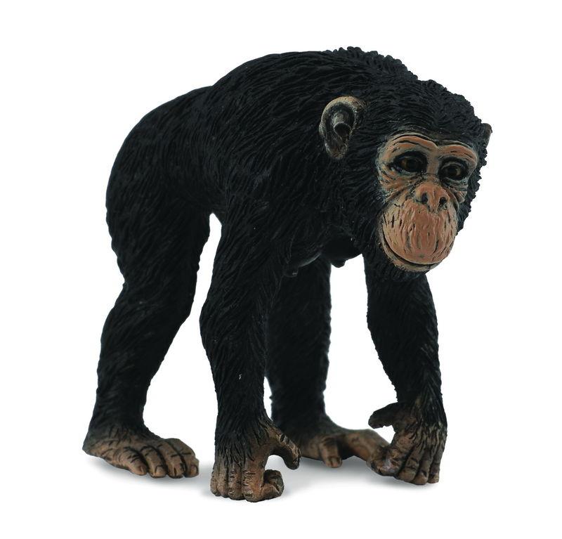 CO88493 Chimpanzee Female