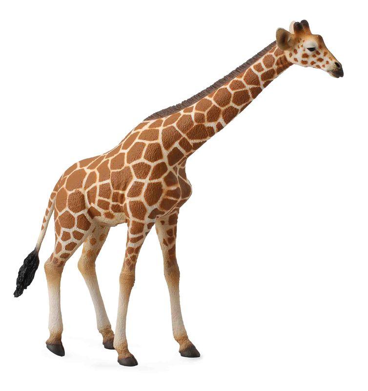 CO88534 Reticulated Giraffe