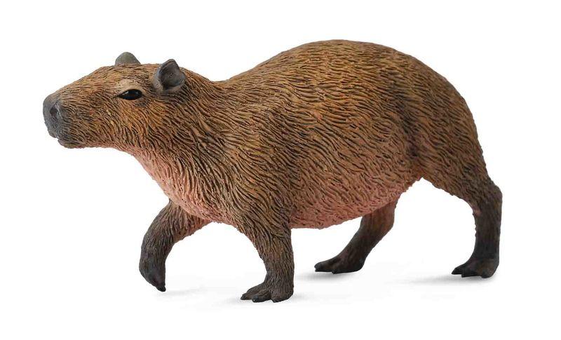 CO88540 Capybara
