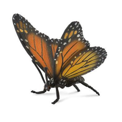 CO88598 Monach Butterfly