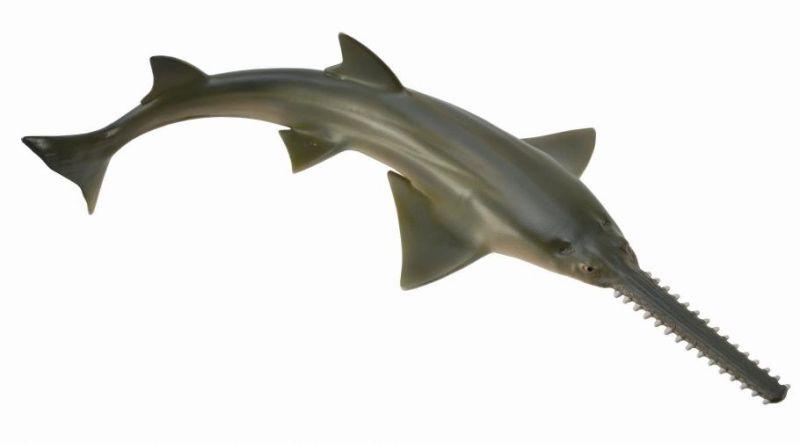 CO88659 Sawfish