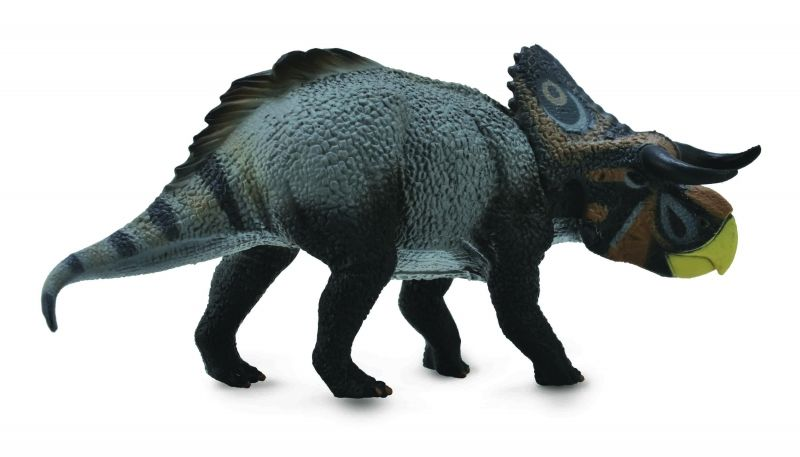 CO88705 Nasutoceratops