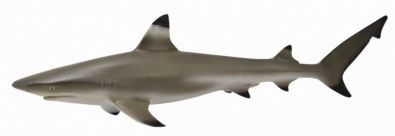 CO88726 Blacktip Reef Shark