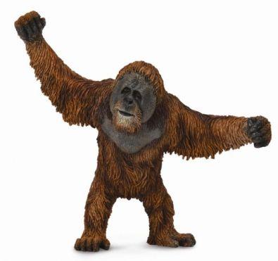 CO88730 Orangutan
