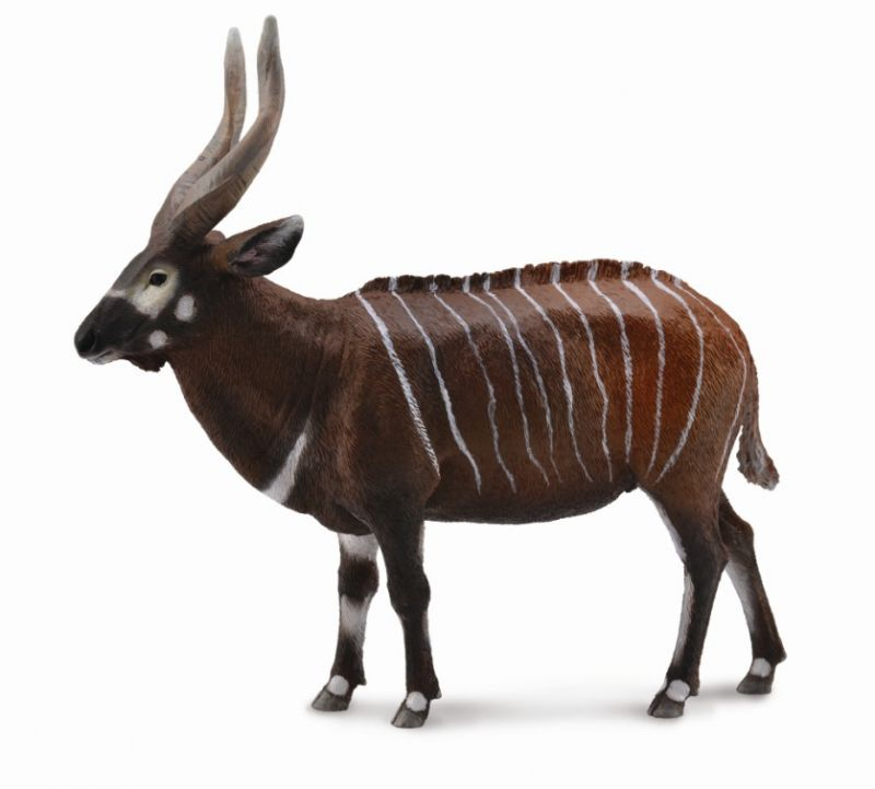 CO88809 Bongo Antelope