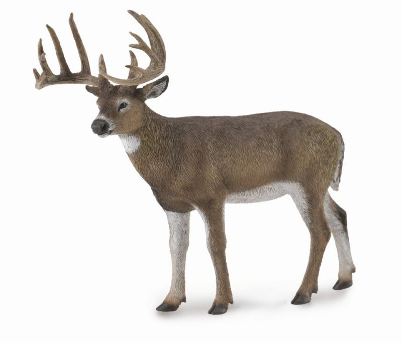 CO88832 WhiteTailed Deer