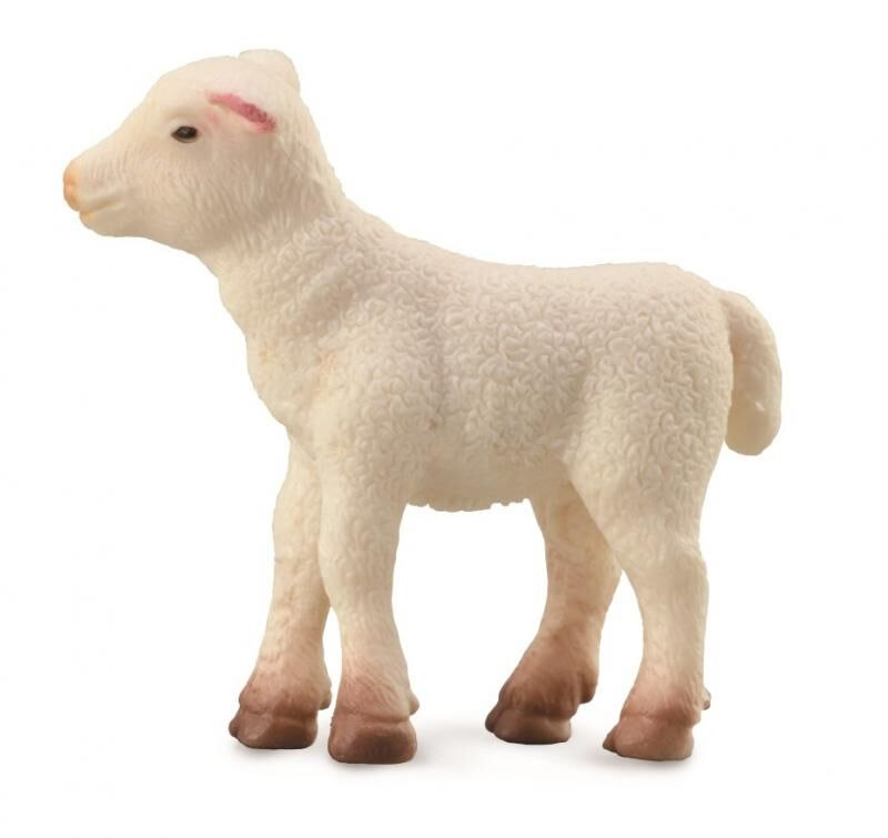 CO 88009 Lamb Standing S