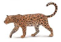 African Leopard (XL) CO88866
