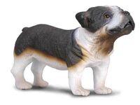 Bull Dog (M) CO88179