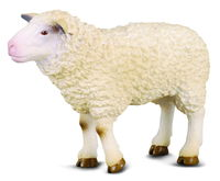 CO88008 Sheep