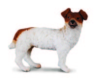 CO88080 Jack Russell Terrier