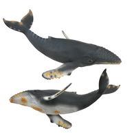 CO88347 Humpback Whale