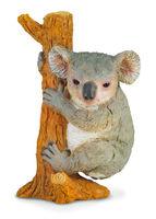 CO88356 Koala Climbing