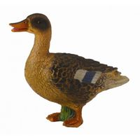 CO88379 Mallard Duck Female