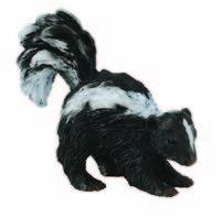 Skunk (S) CO88381