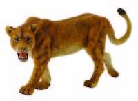Lioness (L) CO88415