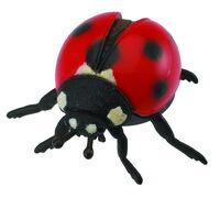 Ladybird (M) CO88474