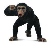 Chimpanzee Male (M) CO88492