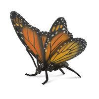 Monach Butterfly (L) CO88598