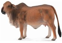 CO88600 Red Brahman Cow