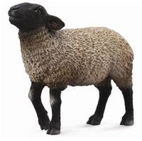 CO88636 Suffolk Sheep