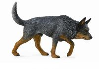 CO88672 Australian Cattle Dog