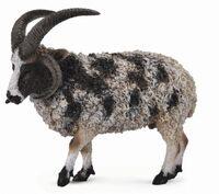 Jacob Sheep (L) CO88728