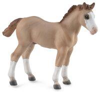 Quarter Foal - Red Dun (M) CO88814