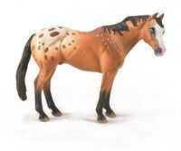 Light Brown Appaloosa Stallion  (L) CO88933