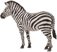 Common Zebra (L) CO88830