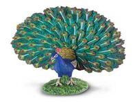 Peacock (L) CO88209