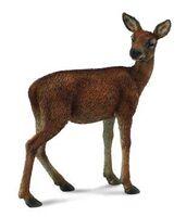 Red Deer Hind (M) CO88470