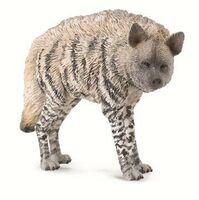 Striped Hyena  (M) CO88566