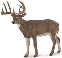 White-Tailed Deer (L) CO88832