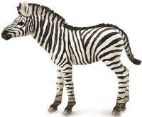 Zebra Foal (M) CO88850
